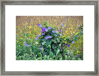 Purple In The Morning Framed Print by Brittany H