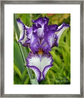 Purple Iris Art Framed Print by Rebecca Margraf