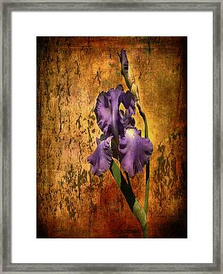 Purple Iris At Sunset Framed Print by Bellesouth Studio