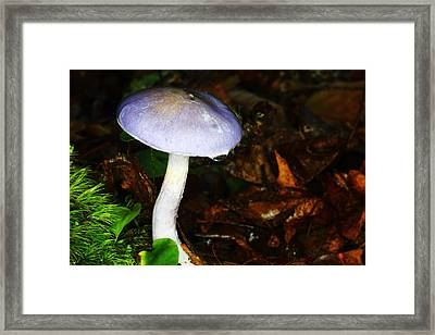 Purple Mushroom Russula Cyanoxantha Framed Print by Andrew Pacheco