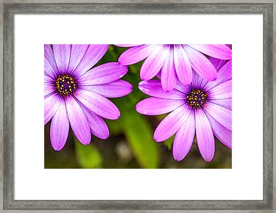 Purple Pals 2 Framed Print by Az Jackson