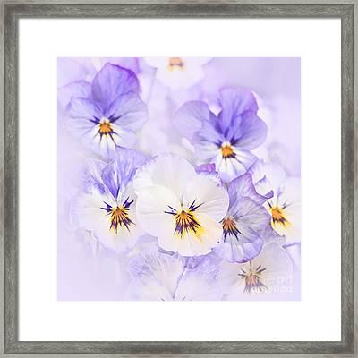 Purple Pansies Framed Print by Elena Elisseeva