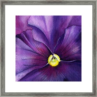 Purple Pansy Framed Print by Mindy Lighthipe
