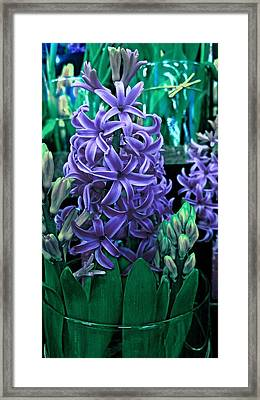 Purple Passion Framed Print by Levi Wilkinson