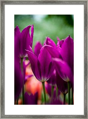Purple Persuasion Framed Print by KG Photography