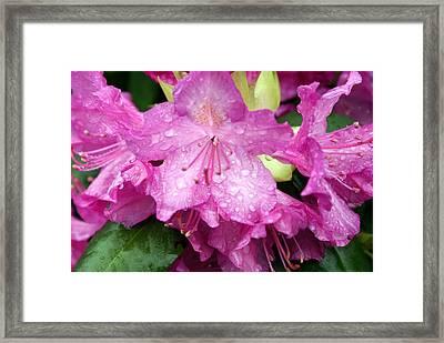 Purple Pink Horizontal Framed Print by Marty Koch