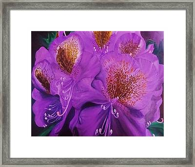 Purple Rhododendron Framed Print by Amelia Emery