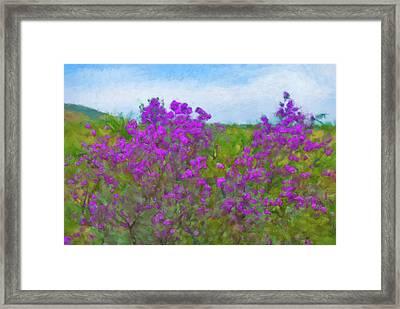 Purple Sage Big Bend Framed Print by Gary Grayson