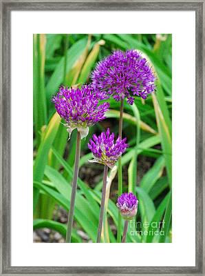 Purple Sensation Framed Print by Nancy Mueller