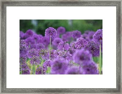 Purple Sensations Framed Print by Nicholas Miller