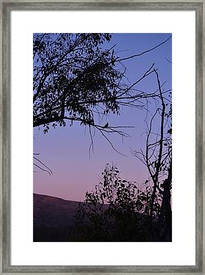 Purple Sunset With Tree And Bird Silhouette Framed Print by Linda Brody