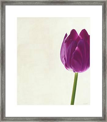 Purple Tulip Framed Print by Rita Magos