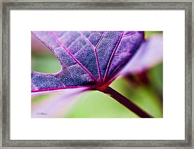 Purple Veins Framed Print by Christopher Holmes