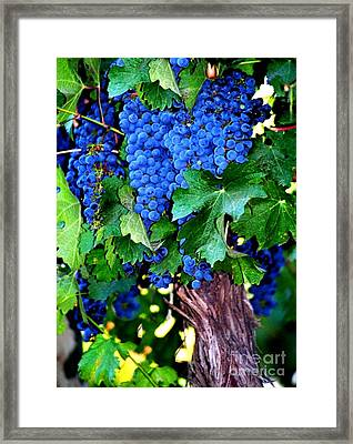 Purple Velvet Framed Print by Laurel Sherman
