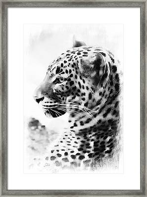 Purrfect Framed Print by Clare Bevan