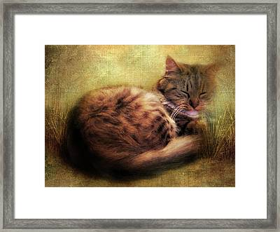 Purrfectly Content Framed Print by Jessica Jenney