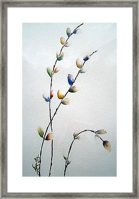 Pussy Willows Framed Print by Joanne Smoley
