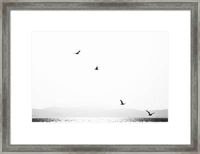 Quartet Framed Print by Hayato Matsumoto