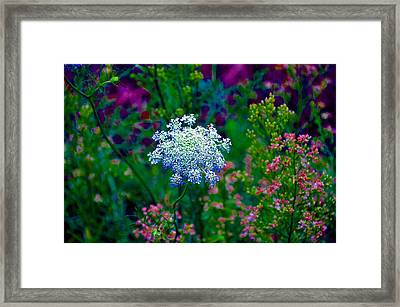 Queen Anne Framed Print by Brittany H