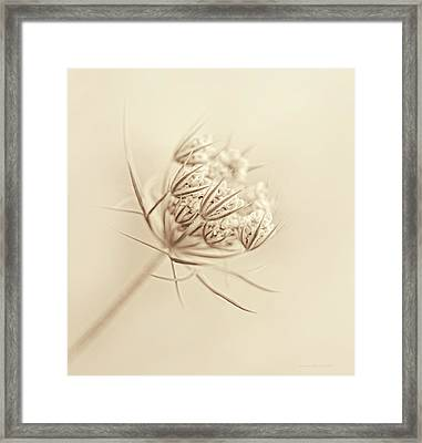 Queen Anne's Lace Flower Buds Sepia Framed Print by Jennie Marie Schell