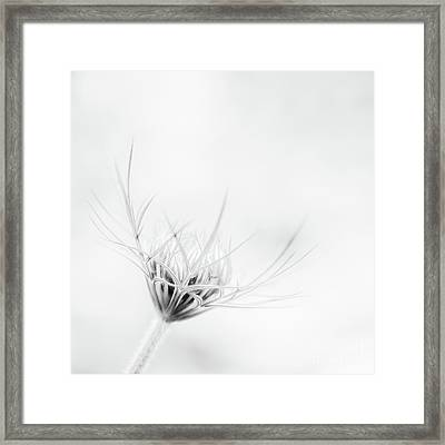 Queen Annes Lace Framed Print by Janet Burdon