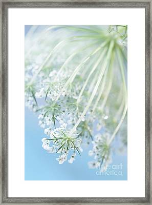 Queen Anne's Lace Framed Print by Masako Metz