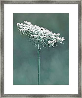 Queen Anne's Lace Wild Flower Teal Framed Print by Jennie Marie Schell