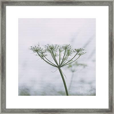 Queen Anne's Lace Framed Print by Ivy Ho