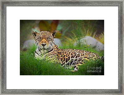 Queen Of The Jungle Framed Print by Jamie Pham