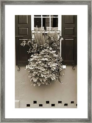 Queen Street Flowers Charleston Sc Framed Print by Dustin K Ryan