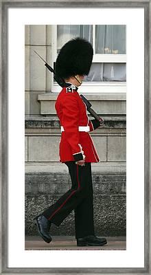 Queen's Guard Framed Print by Daniel Hagerman