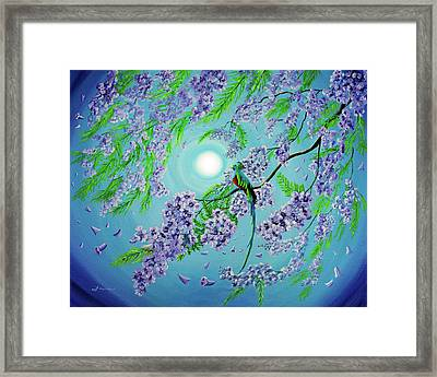 Quetzal Bird In Jacaranda Tree Framed Print by Laura Iverson
