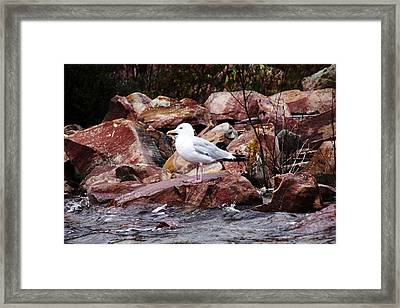 Quiet Time Framed Print by Debbie Oppermann