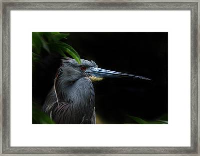 Quietly Alert Framed Print by Skip Willits