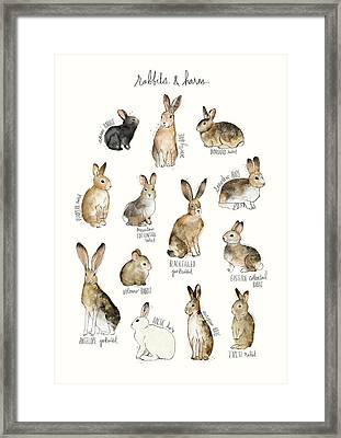 Rabbits And Hares Framed Print by Amy Hamilton