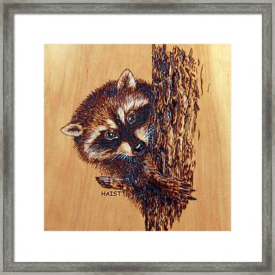 Racoon 2pillow/bag Framed Print by Ron Haist