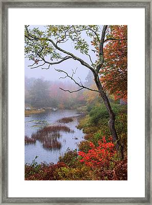 Rain Framed Print by Chad Dutson