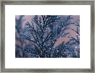 Rain Day Framed Print by SK Pfphotography