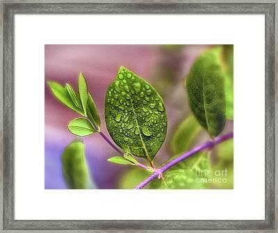Rain Drops Framed Print by Arnie Goldstein