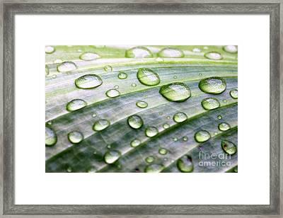 Rain Drops On A Leaf Framed Print by Diann Fisher