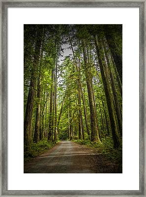 Rain Forest Dirt Road Framed Print by Randall Nyhof