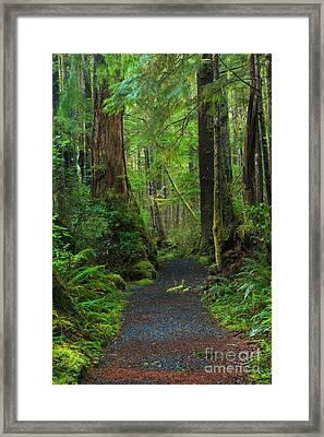 Rain Forest Glow Framed Print by Adam Jewell