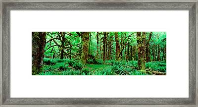 Rain Forest, Olympic National Park Framed Print by Panoramic Images