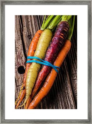 Rainbow Carrots Framed Print by Garry Gay