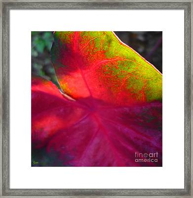 Rainbow Coleus 2 Framed Print by Jeff Breiman