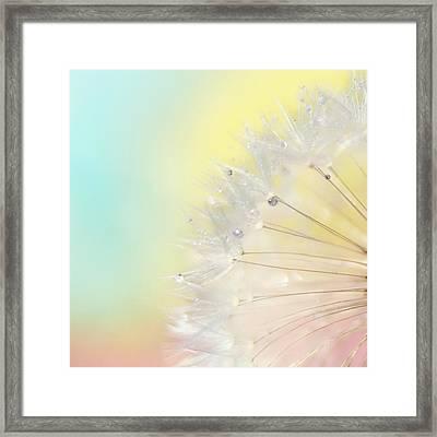 Rainbow Connection II Framed Print by Amy Tyler