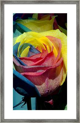 Rainbow Of Love 2 Framed Print by Karen Musick