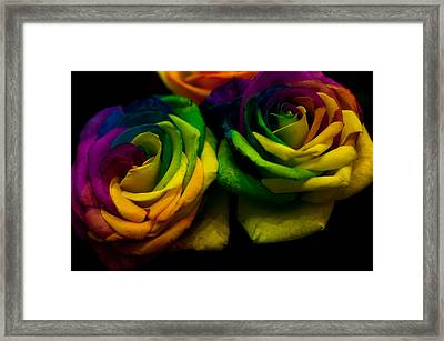 Rainbow Roses Framed Print by Jenny Rainbow