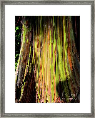 Rainbow Tree Framed Print by Jon Burch Photography