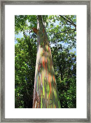 Rainbow Tree Framed Print by Pierre Leclerc Photography